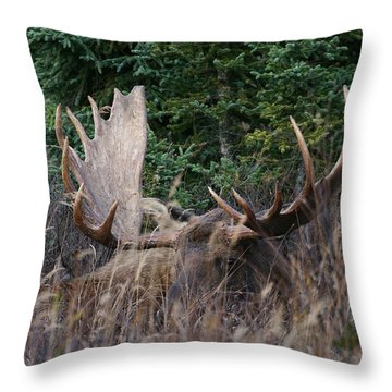 Throw Pillow featuring the photograph Splendor In The Grass by Doug Lloyd
