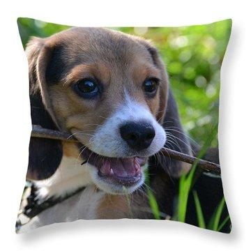 Spot The Pocket Beagle Throw Pillow