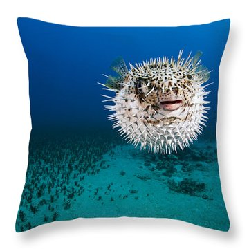 Spotted Porcupinefish II Throw Pillow by Dave Fleetham