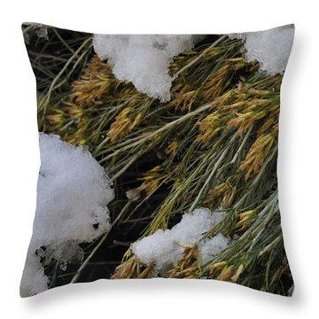 Spring Arrives Throw Pillow