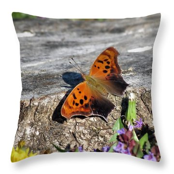 Throw Pillow featuring the photograph Spring Butterfly by Janice Drew