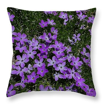 Throw Pillow featuring the photograph Spreading Flox Wildlfower by Blair Wainman