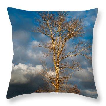 Spring Light In Autumnal Day Throw Pillow by Jenny Rainbow