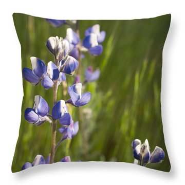 Spring Lupines  Throw Pillow by Priya Ghose