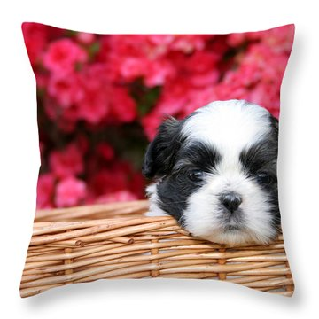 Spring Puppy  Throw Pillow by Darren Fisher
