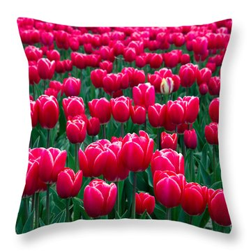 Spring Tulips Throw Pillow by David R Frazier and Photo Researchers
