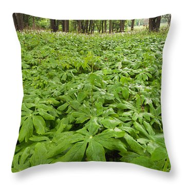 Springtime Mayapples Throw Pillow by Steve Gadomski