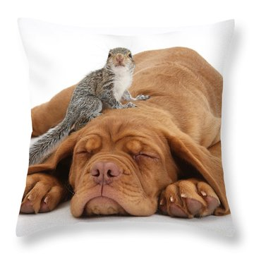Squirrel And Puppy Throw Pillow by Mark Taylor