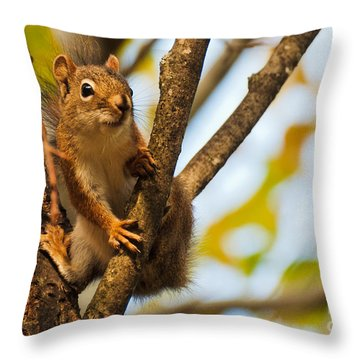 Throw Pillow featuring the photograph Squirrel On High by Cheryl Baxter