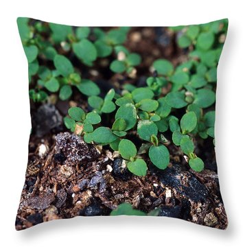 St. Johns Wort Throw Pillow by Science Source