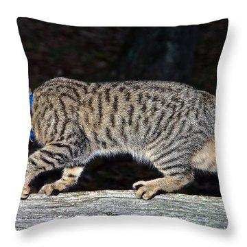 Stalker Throw Pillow by Susan Leggett