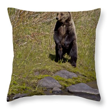 Throw Pillow featuring the photograph Standing Grizzly by J L Woody Wooden
