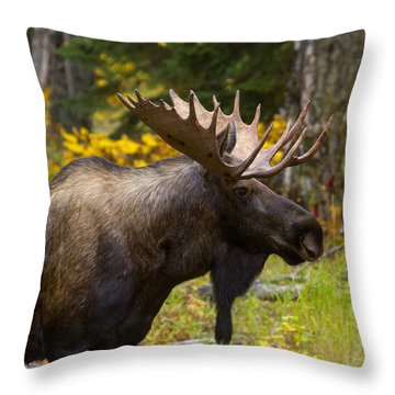Throw Pillow featuring the photograph Standing Proud by Doug Lloyd