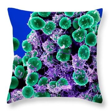 Staphylococcus Epidermidis Bacteria, Sem Throw Pillow by Science Source