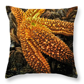 Starfish Throw Pillow by Paul Ward