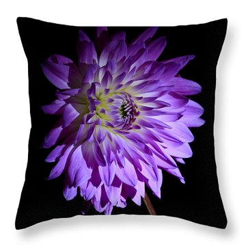 Starlight Star Bright Throw Pillow by Inspired Nature Photography Fine Art Photography