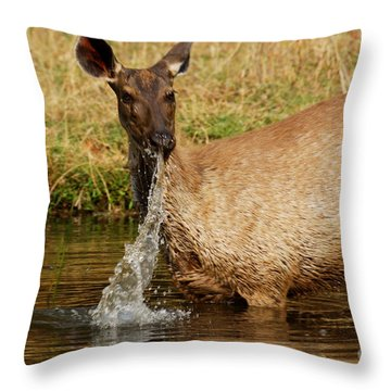 Throw Pillow featuring the photograph Startled by Fotosas Photography