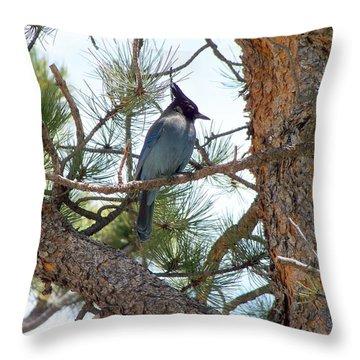 Stellar's Jay Throw Pillow