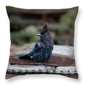 Throw Pillow featuring the digital art Steller Jay In The Birdbath by Carol Ailles
