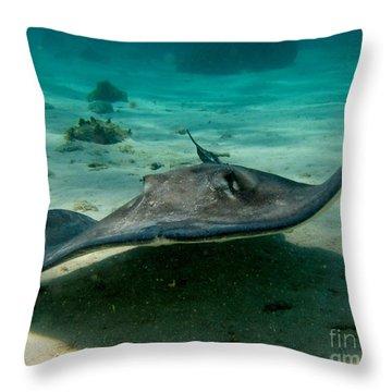 Stingray Approaching Throw Pillow by John Malone