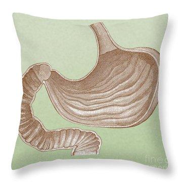 Stomach Throw Pillow