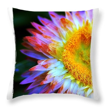 Strawflower Throw Pillow by Judi Bagwell