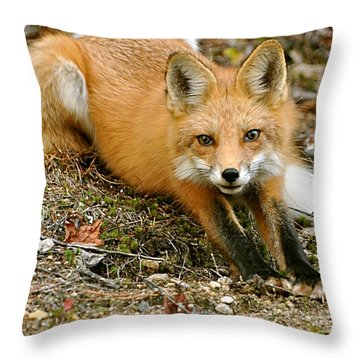 Stretching Fox Throw Pillow by Rick Frost