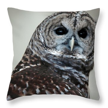 Striped Owl Throw Pillow by LeeAnn McLaneGoetz McLaneGoetzStudioLLCcom