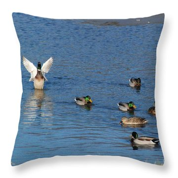 Throw Pillow featuring the photograph Struttin It by Mark McReynolds