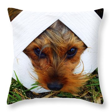 Stuck On You Throw Pillow by Karen Wiles