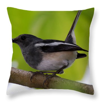 Throw Pillow featuring the photograph Study Of A Magpie-robin by Fotosas Photography