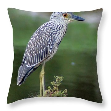 Stumped Night Heron Throw Pillow by Benanne Stiens