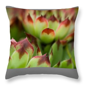 Succulent Throw Pillow by Trevor Chriss