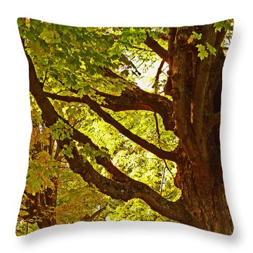 Throw Pillow featuring the photograph Sugarbush by William Fields