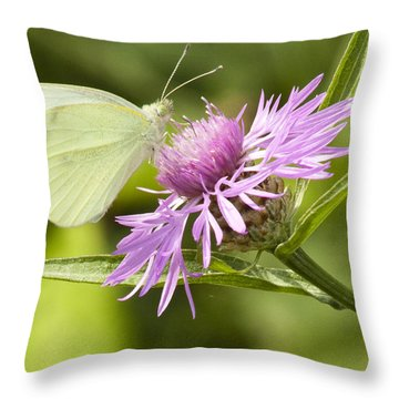 Throw Pillow featuring the photograph Sulfer On Wildflower by Darleen Stry