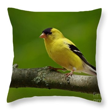 Summer Joy - Male Gold Finch Throw Pillow by Inspired Nature Photography Fine Art Photography