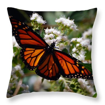 Summers Treat Throw Pillow