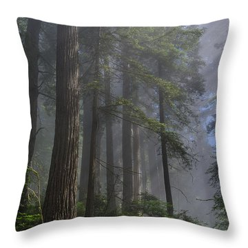 Sun Breaking On Redwoods Throw Pillow