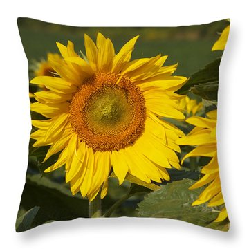 Throw Pillow featuring the photograph Sun Flower by William Norton