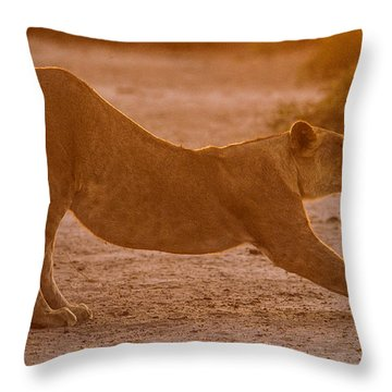 Sun Stretch Throw Pillow