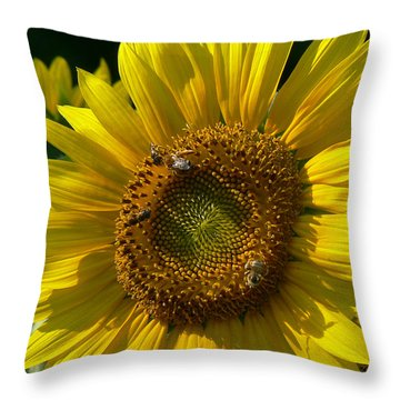 Sunflower 4 Throw Pillow by EricaMaxine  Price