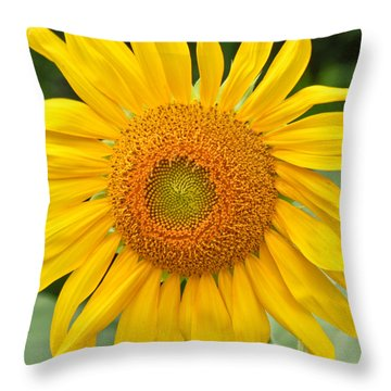 Sunflower Days Throw Pillow