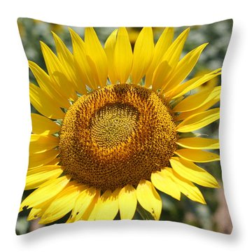 Throw Pillow featuring the photograph Sunflower by Donna  Smith