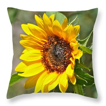 Throw Pillow featuring the photograph Sunflower by Eve Spring