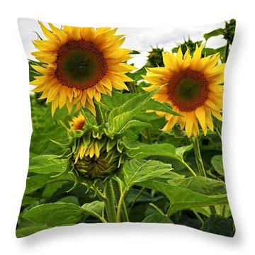 Sunflower Field Throw Pillow by Elena Elisseeva