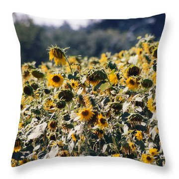 Throw Pillow featuring the photograph Sunflowers by Maureen E Ritter