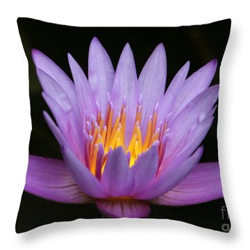 Sunlit Water Lily Throw Pillow by Sabrina L Ryan