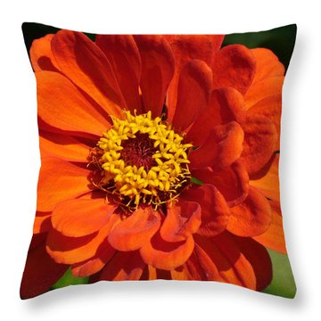 Throw Pillow featuring the photograph Sunny Delight by Lingfai Leung