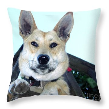 Throw Pillow featuring the photograph Sunny by Rory Sagner