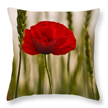 Sunset Glow. Throw Pillow by Clare Bambers